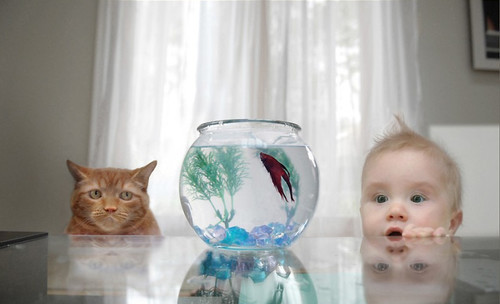 Looking at a fish from two different respectives.